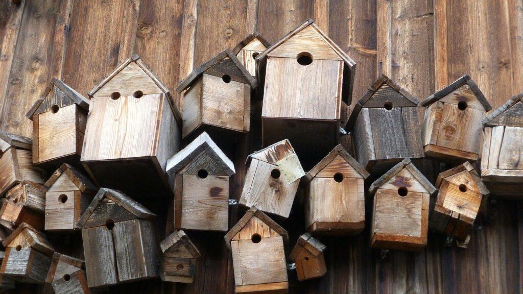 Pemenang Lotere Membangun Kotak Sarang Burung Komunitas