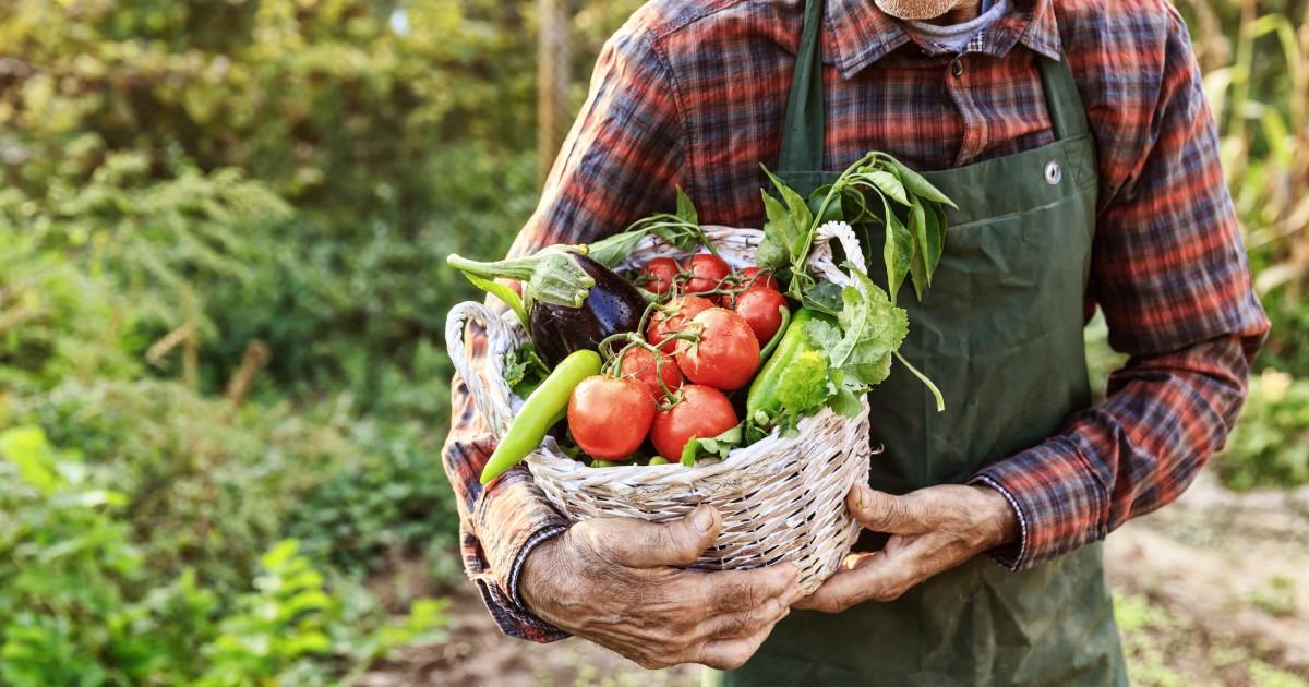 Agustus di kebun adalah waktu untuk kebaikan yang ditanam sendiri