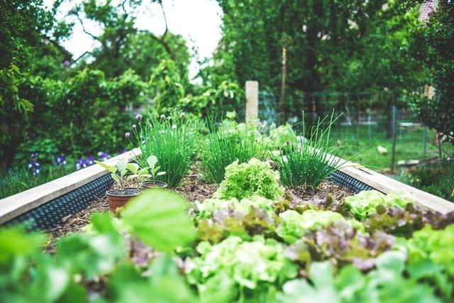 Cara Memulai Pertanian Halaman Belakang Dalam 5 Langkah Mudah